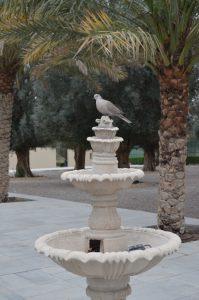 Desert Palm Per Aquum|Wedding
