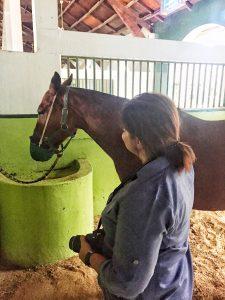Desert Palm Per Aquum|Horses