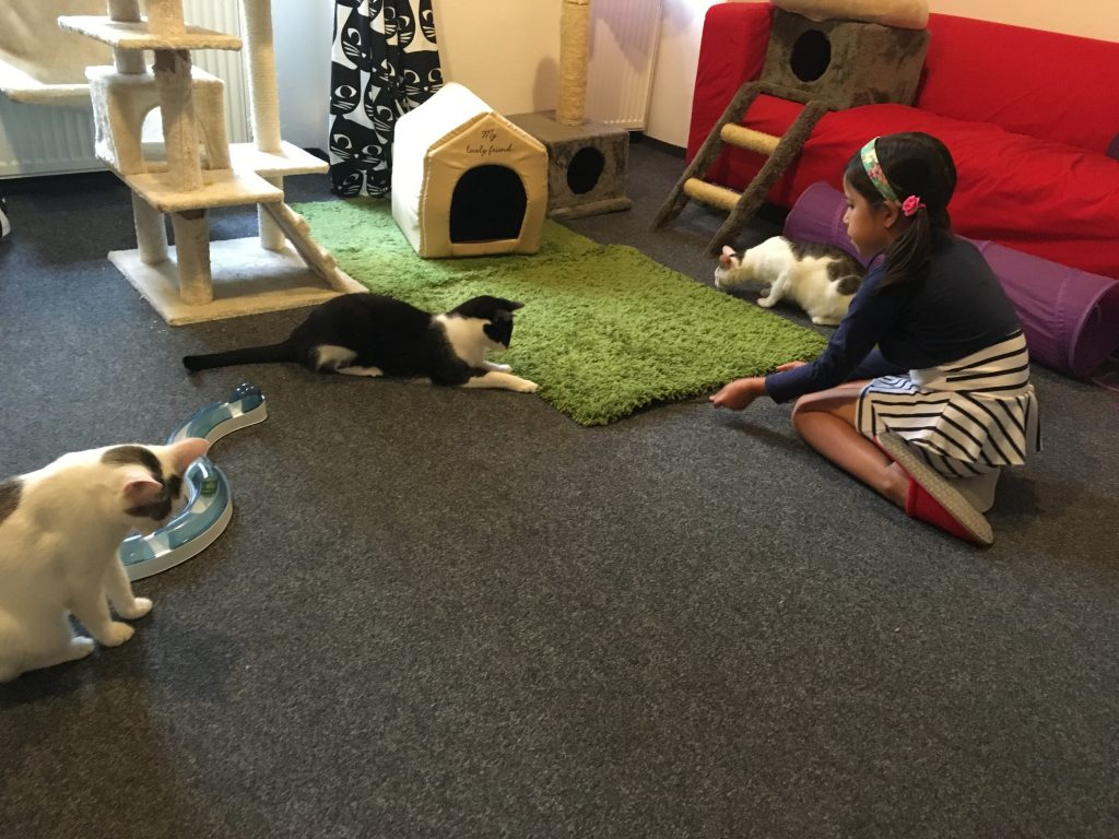Cat cafe in Prague is kid friendly
