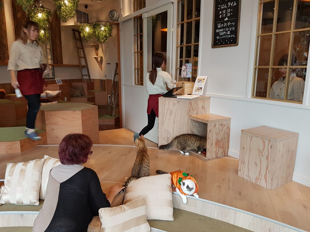 Interior shot of cat cafe in Tokyo