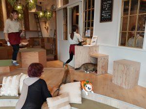 Interior shot of cat cafe in Tokyo
