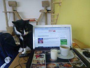 Cat & computers