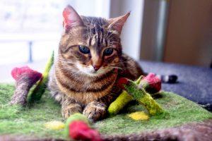 Cat Cafe Nurri | Cat at play