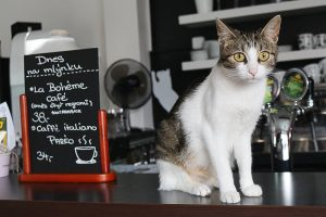 Cat cafe in Olomouc, Czech Republic by Love and Road