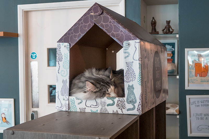 Cat sleeping in a little house