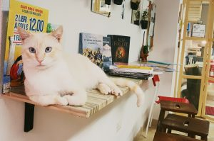 Cat cuddle and a book anyone?   Image credit: Claudia of My Adventures Across the World