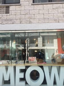 Outdoor view of Cat cafe in New York   Image Credits: Girl with a Passport
