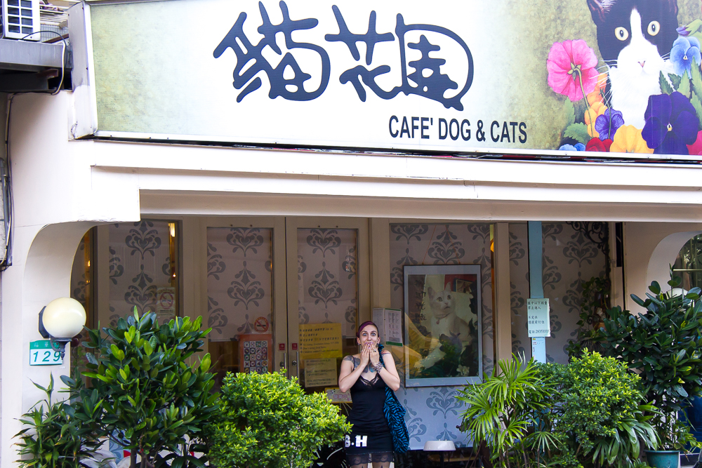 Cat cafe exterior in Taipei