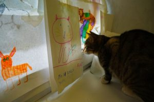 One of the cat cafes around the world in Minsk, Belarus Cat looking at drawing of a cat