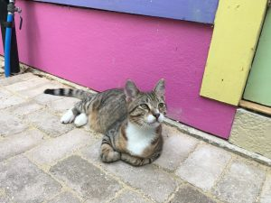 Cat cafe in New Orleans