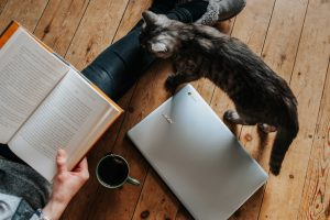 Cat cafes around the world