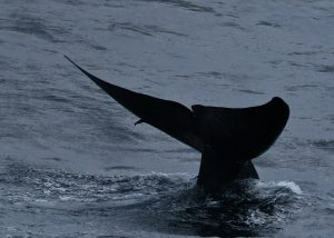 Picture courtesy: Raja and the whales| Whale tail