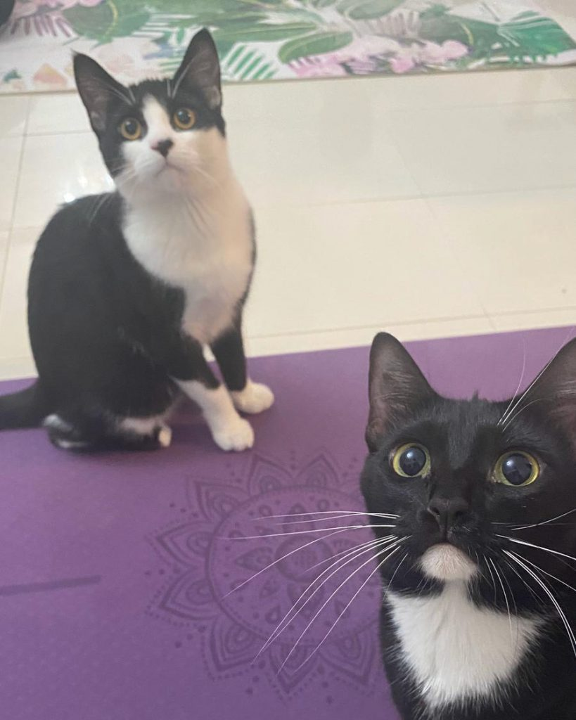 cats on yoga mats | Meowga | Yoga with cats in Dubai