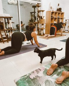 Meowga - Yoga with cats in Dubai in session